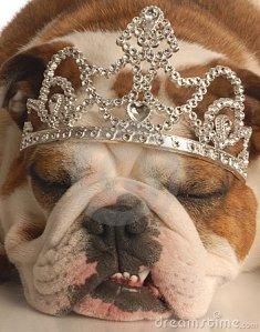 dog-wearing-tiara-thumb6958874